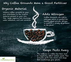 Why Coffee Beans Make Good Fertilizer. (theIndoorGardens) Tags: coffee cup drink cafe espresso aroma brown breakfast hot caffeine background bean black mug beverage closeup dark morning vintage white food style taste art wooden close retro steam warm grain cappuccino texture wood break cafeteria smoke roasted bar fresh aromatic energy chalk paint object natural chalkboard picture drawing modern idea indoor gardening
