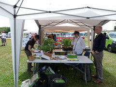Food4families and Reading Food Growing Network - Whitley Fun Day (2) (karenblakeman) Tags: food4families readingfoodgrowingnetwork rfgn seedswap tomatoes chillis northumberlandavenue reading uk 2017 july southreadingchurchesfunday whitley rabsonsrec johnrabsonrecreationground berkshire
