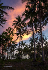 Tropical Nightfall (pietkagab (on the road)) Tags: ko lanta thailand krabi palms palm grove trees tropics propic sunset twilight sky clouds color colorful asia thai asian pietkagab photography pentax piotrgaborek pentaxk5ii travel trip tourism outdoors nature adventure