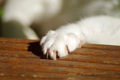 Nelli's Paw (frankbehrens) Tags: katze katzen cat cats chat chats gato gatos paw pfote