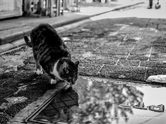 Cat 33 (`ARroWCoLT) Tags: reflection yansıma hotweather thirstycat su water nx300 30mm sokakkedisi straycat straycatrules pool stairs bokeh pet animal depthoffield monochrome bnw bnwstreet streetart türkiye turkey street streetphotography outdoor siyahbeyaz art bw blackwhite blackandwhite arrowcolt catstagram istanbul