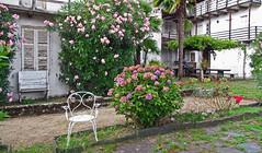 Courtyard in Ronco, Lake Orta, Italy (frank28883) Tags: ronco roncoinferiore pella lakeorta lacdorta ortasee courtyard cortiletto patios patio ortensia hortensia azalea