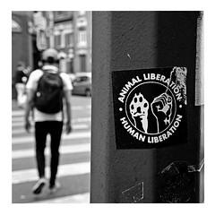 i'm free (japanese forms) Tags: ©japaneseforms2017 ボケ ボケ味 モノクロ 日本フォーム 黒と白 animalliberation bw blackwhite blackandwhite blancoynegro bokeh candid humanliberation imfree monochrome random schwarzweis square squareformat sticker strasenfotografie straatfotografie streetphotography thewho vlaanderen zwartwit pun wortspiel woordspelling