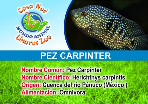 pez carpinter