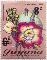 Guyana 6 cents Canon-Ball Tree 8 cents overprint