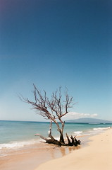 Maui (teacup_dreams) Tags: maui hawaii beach film 35mm chinon