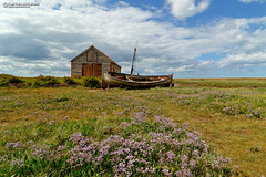 The Coal Barn at Thornham Staithe (Nigel Blake, 15 MILLION views! Many thanks!) Tags: coal barn thornham staithe north norfolk harbour nigelblakephotography nigelblake landscape seascape coast sea lavender limonium vulgare