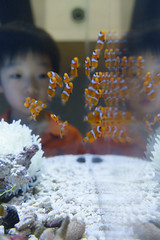 20170613 Port of Nagoya Aquarium 6 (BONGURI) Tags: 名古屋市 愛知県 日本 jp カクレクマノミ クマノミ 小魚 反射 crownfish reflect reflection portofnagoyapublicaquarium nagoyapublicaquarium 名古屋港水族館 portofnagoya 名古屋港 minatoward 港区 港 nagoya 名古屋 aichi 愛知 sony rx100m3