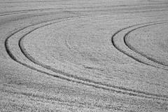 Möhnesee - Haarstrang (Michael.Kemper) Tags: canon eos 6d canoneos6d ef f4l usm deutschland germany nrw nordrheinwestfalen northrhinewestphalia westphalia möhnesee moehnesee möhne moehne see lake sauerland kreis soest gemeinde flus river reservoir mohne mohnesee dambusters dam möhnetalsperre schwarz weis weiss black white feld felder field fields kurve kurven curve curves canonef70200f4lusm 70200 abstract abstrakt minimalistisch minimalismus minimalistic minimalism linien linie line lines harmonie harmony