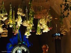 underground-tunnel-floraart-instalation_13