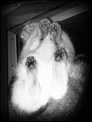 Franca na oknie dachowym (zdjęcie od środka) (stempel*) Tags: windowsphone franca kot ato kitty bw czb zima winter okno window other side cat polska poland polen polonia gambezia