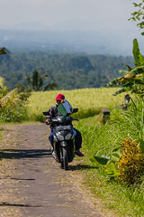 IMG_0578 (Ela&Piotr) Tags: bali indonesia indonezja jatiluwih ricefields