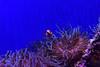 M00_4309.jpg (M. Jarrett) Tags: sydney2017 sydneyaquarium