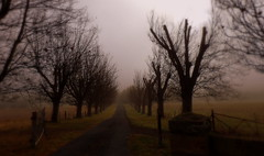Happy FOGGY Fence Friday (Lani Elliott) Tags: nature naturephotography lanielliott landscape trees road perspective fog foggy mist misty moody scene view scenic scenictasmania winter winterscene australia tasmania mood happyfencefriday gorgeous beautiful