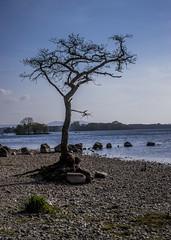 Milarrochy bay (jbc58) Tags: loch lomond scotland milarrochy bay balmaha