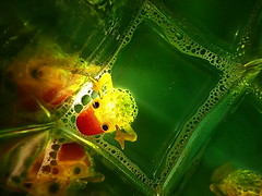 poisonous ...help ! (christikren) Tags: macro mondays poisonous christikren gift panasonic green hmm umwelt schützen help lauge plasticanimal plasticfigure poisoned protect protecttheinviroment savetheinviroment