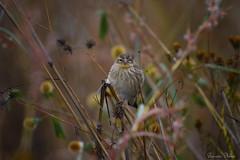 Give me weed (Sumarie Slabber) Tags: weed bird birding rietvleinaturereserve southafrica nature sumarieslabber weeds birdsofgauteng birdlife