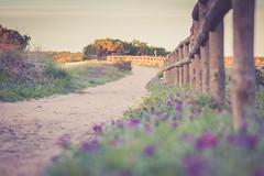 Caminos (okdokeycarlos) Tags: campo laguna costa blanca españa parque natural alicante flores naturaleza comunidad valenciana camino ruta senderismo deporte aire libre paseos canon eos 7d reflex torrevieja la mata salinas lago