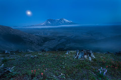 Beauty survives (P Matthews) Tags: devastation lupine fullmoon fog mtsthelens bluehour crater paintbrush