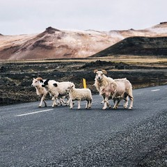 Well, change of plans for Iceland...after talking to some park rangers we found out the route we were planning to take through the center is unpassable at the moment. So it's time to improvise. Since we already have flights booked we can't wait for the pa