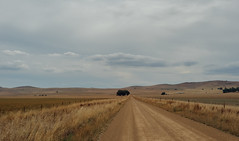 Rural 2. (Ian M's) Tags: ranges sa vsco