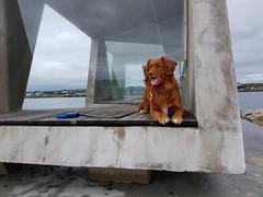 Rex posing (GeirB,) Tags: pet dog hund uteliv varanger finnmark nordnorge