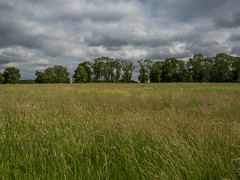Distant Manor (Ian M Bentley) Tags: lyvedennewbield lyveden northamptonshire june 2017 nationaltrust unfinished incomplete roofless england olympus omd em5ii zuiko1240mmprolens gradeilistedbuilding enigmatic eastnorthampton elizabethan maze meadow trees stormyskies dramatic 1605 tresham outdoor sky cloud architecture countryhouse manor dtstant wideangle landscape field