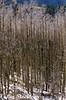 Scan_0016.jpg (Les_Stockton) Tags: canoscan8800f canon film neworleans louisiana unitedstates us
