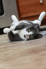 Ellie my cousins kitty (caroline_wburg) Tags: nikond3400 greeneyes cat
