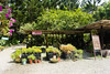 IMG_4383 (翔志) Tags: taiwan taoyuan fuxing shanggaorao valley garden taoyuanhsienku 桃源仙谷