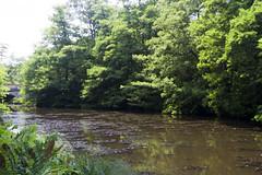 2017-06-18 Virginia Water Savill Gardens IMG_9046 (Darkstar Moody) Tags: virginiawater savillgardens plants flowers trees water ponds lakes wildlife gardens flora fauna