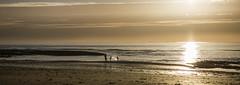 Distant splash (Blue Rock Fox) Tags: lehavre france normandy beach shore sand coastocean sea sun settingsun sundown intothesun intothelight children playing play sunset canon5d111 evening people water davidbellis davidmichaelbellis bluerockfox canon5diii canon