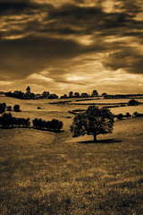 Incoming Storm (DeadPixel10) Tags: portrait nature tree stormy sepiatone sepia moody dramatic