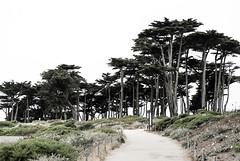 Lands End Trail, San Francisco (Sharon Mollerus) Tags: landsend sutrobaths sutropark cypresstrees pointlobos sutrodistrict sanfrancisco california unitedstates us cfpti17