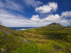 Oahu Skies (RobertCross1 (off and on)) Tags: 1250mmf3563mzuiko em5 hi hawaii hawaiikai honolulu kokocrater makapuu omd oahu olympus beach bluesky clouds hiking landscape nature seascape trees volcanic water