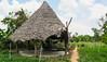 IMG_46131 (Manveer Jarosz) Tags: auroville bharat hindustan india solitudefarm southindia tamilnadu wwoof worldwideopportunitiesonorganicfarms agriculture farm field home hut rural solitude village