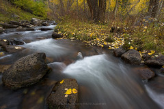 South Fork (Bob Bowman Photography) Tags: highsierra sierra sierranevada southfork creek bishop california water stream river fall autumn nikon bw