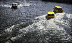 Busy water bees (glessew) Tags: watertaxi taxi cab maas rotterdam boat boot bateau nederland netherlands speed river rivier fleuve flus yellow public transport