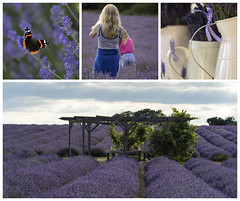 Mayfield Lavender Farm (hehaden) Tags: flowers lavender butterfly redadmiral woman child field rows lavenderfarm mayfieldlavenderfarm banstead surrey collage sonya7mkii