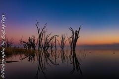 IMG_5549 (biglaptogs) Tags: barmera lakebonney riverland sa states sunsetsunrise