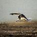 170712-gull-lord-of-flies.jpg