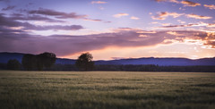Home Field (abdurj) Tags: field sky landscape sunset nature travel sun sunlight summer shadow grass evening wave shadows countryside mountain dawn sunny agriculture panoramic outdoors horizontal dusk norge norway oslo no