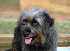 Sábado-animal (sonia furtado) Tags: sábadoanimal animal cão cachorro animaldeestimação soniafurtado frenteafrente nanaturezainnature