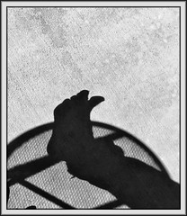 Sunday conversation (Bob R.L. Evans) Tags: abstract foot toes blackandwhite lightandshadow lowkey negativespace ipadphotography leftfoot