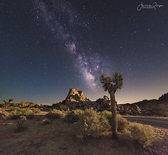 The Desert Sky Has a Million Eyes (Jinna van Ringen) Tags: travel milkyway galaxy astrophotography astronomy jinna van ringen jinnavanringen travelphotography joshua joshuatreenationalpark joshuatree joshuatreenp
