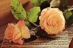 _MG_0102c_BTfx6 - 20.06.2017 (hippo1107) Tags: harmonium rose geige violine tasteninstrument notenblatt musik music canon eos 70d canoneos70d juni 2017