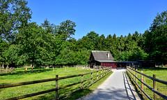 Parc de Sauvabelin (Diegojack) Tags: lausanne vaud suisse paysages chemin perspectives sauvabelin balade parc