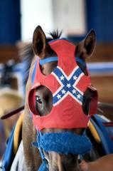 2016-07-10 (50) r5 #3 Wildcat Rising (JLeeFleenor) Tags: photos photography maryland md marylandhorseracing laurelpark horseracing horses thoroughbreds equine equestrian cheval cavalo cavallo cavall caballo pferd paard perd hevonen hest hestur cal kon konj beygir capall ceffyl cuddy yarraman faras alogo soos kuda uma pfeerd koin حصان кон 马 häst άλογο סוס घोड़ा 馬 koń лошадь