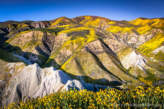 Temblor Mountain Range Covered in Flowers As Sun Sets (Gary Rides Bikes) Tags: california carrizoplain carrizoplainnationalmonument northamerica sanluisobispocounty springtime temblorrange usa beautyinnature cliff day flower goldcolored idyllic inbloom landscape mountain mountainrange mountainridge nature nopeople plain plant remote scenicsnature yellow
