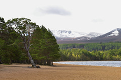 LOCH MORLICH (Scottish Gaelic Loch Mhurlaig)  -  (Selected by GETTY IMAGES) (DESPITE STRAIGHT LINES) Tags: nature mothernature naturalbeauty scotland nikon d800 nikond800 nikon2470mm nikkor2470mmf28 nikongp1 gps paulwilliams despitestraightlines flickr raw landscape scotlandsbeauty uk beauty beautiful island islands water loch lake highlandsofscotland thebeautyofscotland ripples land lochmorlich lochmorlichscotland aviemore badenoch strathspey glenmoreforestpark glenmoreforest glenmore